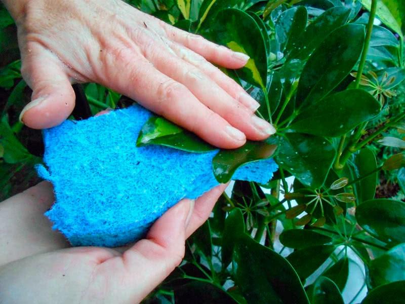 Как правильно мыть листья комнатных растений