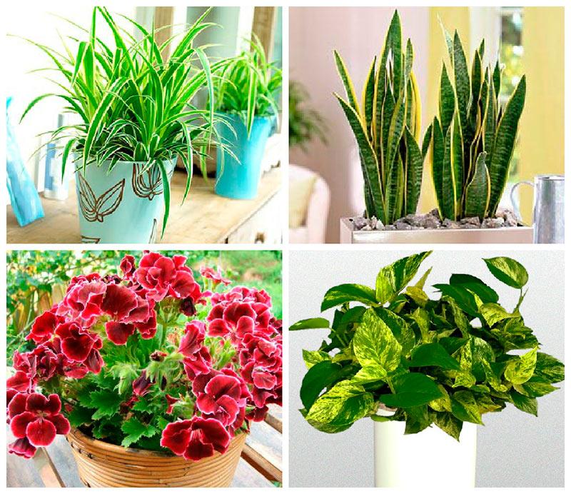 Теневыносливые и тенелюбивые комнатные растения