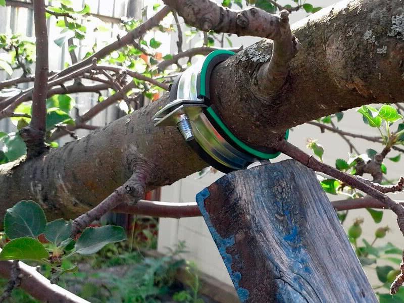 Чем подпереть тяжёлые ветки плодовых деревьев