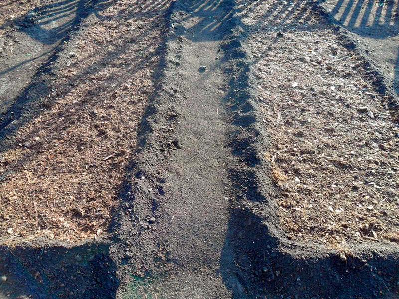 Грядки для посева под зиму